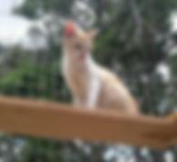 Gato hospedado na passarela externa do gatil.