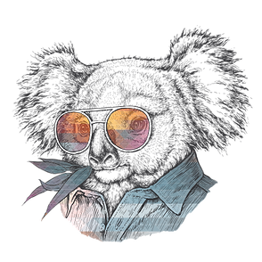koala hipster.png