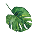 листья5.png