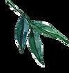 листья2.png