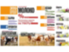 Сайт на wix для производителя молочных продуктов