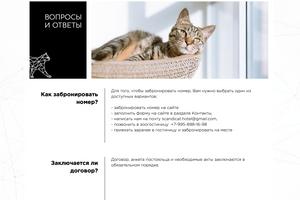 Сайт отеля для кошек