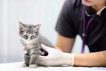 出診獸醫服務