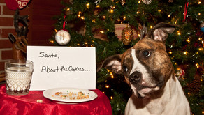 5 Christmas Dangers all Pet Owners Should Know