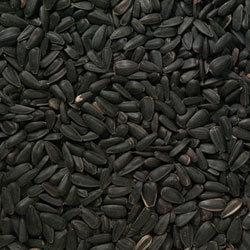 Black Sunflower Seed 25kg