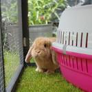 Playtime in the garden