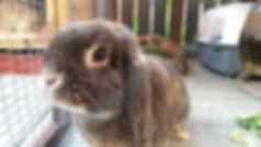 Rabbit Boarding Ingleby Barwick