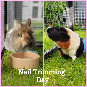 Rabbit & Guinea Pig Nail Trimming