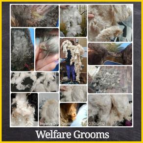 Welfare Grooms - Priority Waiting List