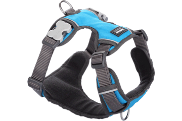 Red Dingo Padded Harness Blue