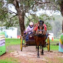 RDAWA State Carriage Driving Games 2014