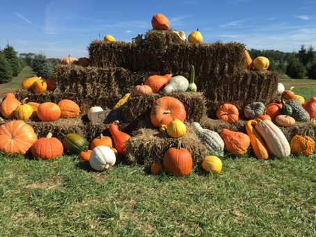 Top Fall Festivities in New Jersey