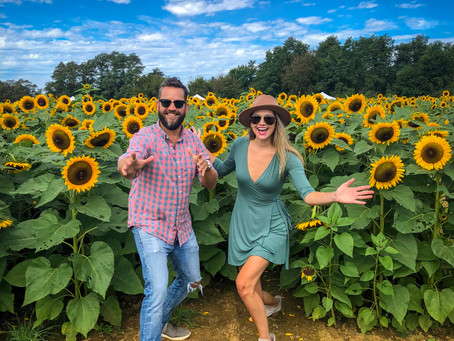 Sunflower Festival at Holland Ridge Farms