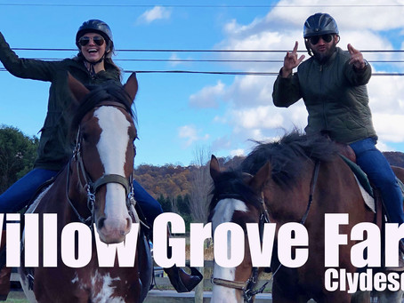 Willow Grove Farm Clydesdales