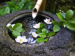 人生は儚い・・沙羅双樹の花