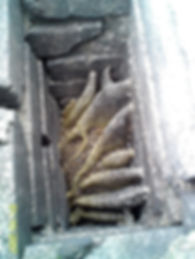 bee and wasp nests in a chimney