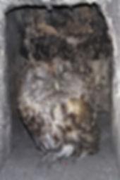 owl in chimney