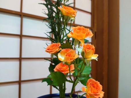 7月12日からの東京都の緊急事態宣言の発出に伴い、六本木の妙善寺さんでの象寛書道教室も、7月15日以降、8月いっぱいのレッスンは中止となります!