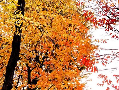 書道教室以外に、筆耕業務で某社に勤務していますが、近くの公園は紅葉がきれいになってましたよ!自然に感謝、感謝です!