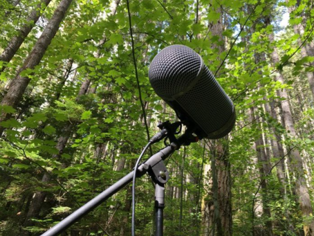 Entrevista al Sr. Sergio Elguezábal, referente del Periodismo Ambiental
