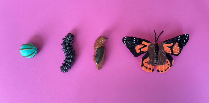 life cycle of a butterfly manipulatives