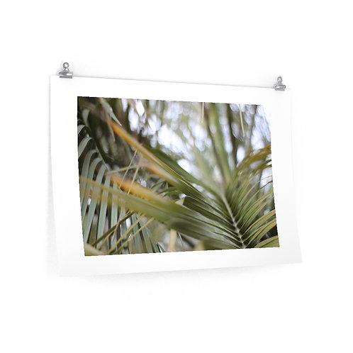 Palm Matte Poster
