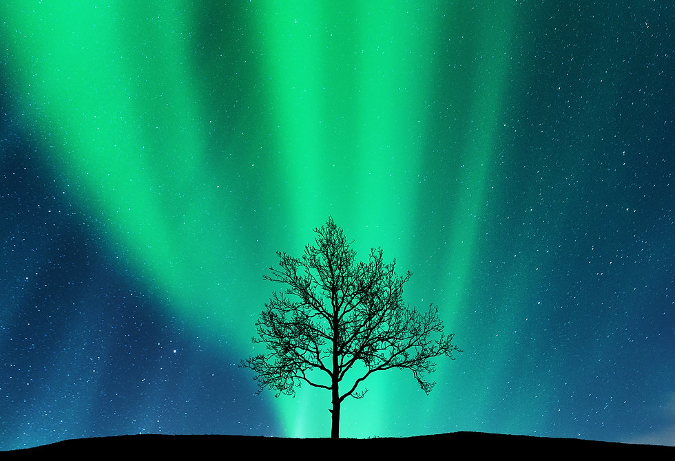 Копия Aurora borealis and silhouette of