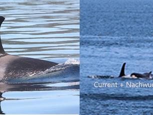 Autorenherbst #9 Wale und Delfine