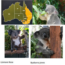 Tiere dieser Welt - Teil 1: Koalas