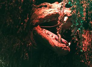 Begegnung mit Drachen