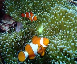 One last chance to save the Great Barrier Reef