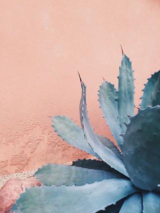 Texturas: Paredes rosas y follajes