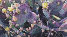 Phoenix Botanical Garden (must!)
