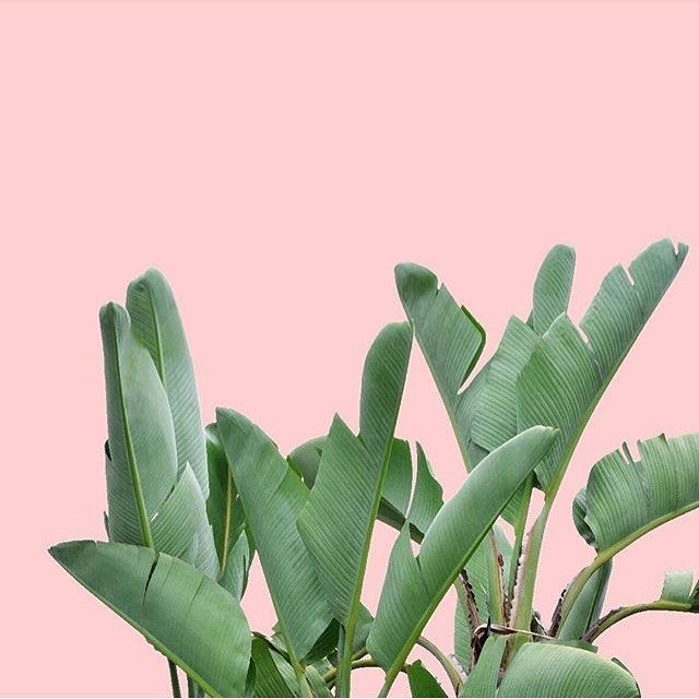 ee0ee28a947700cc3775c98ffbcb977b--pink-walls-plants-background