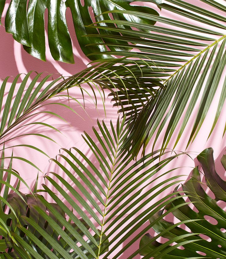 d7d1b7c41b6ab9f92abfa27cb3ba63aa--summer-wallpaper-iphone-pink-palm-leaves-wallpaper-iphone