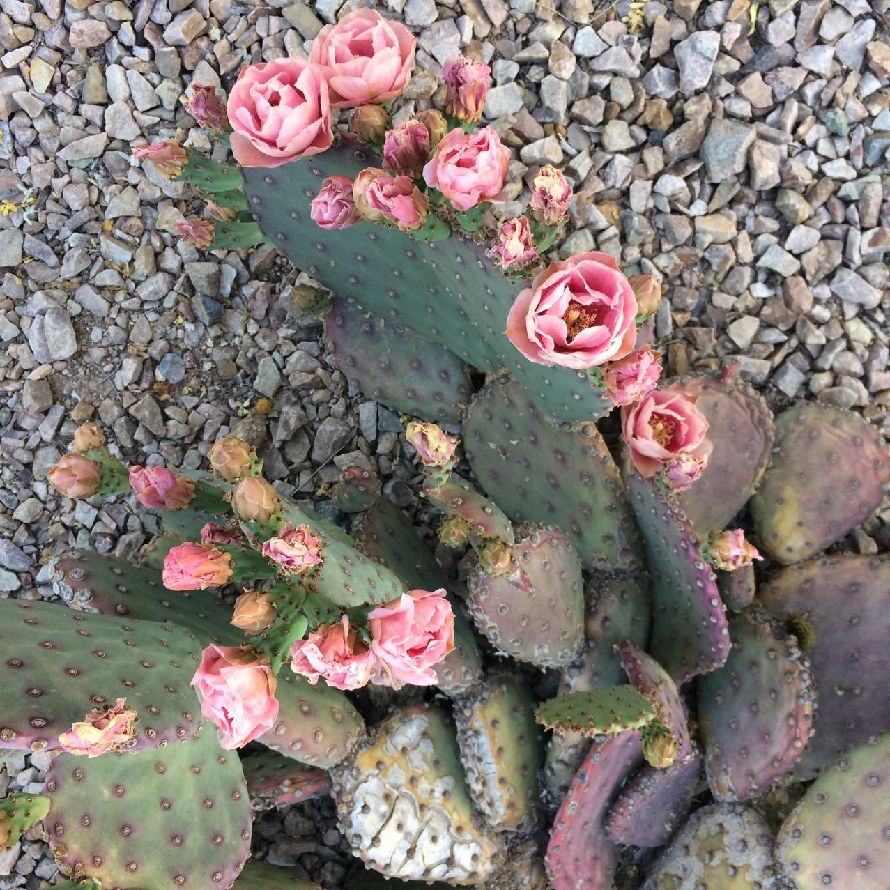 Jardín Botánico Phoenix