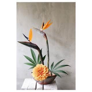 Weed Ikebana por @casadelirio