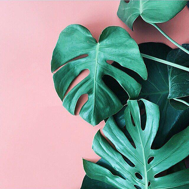 d096cae3a57c13c1b4c3454783f225a9--pink-and-green-plants-palm-green