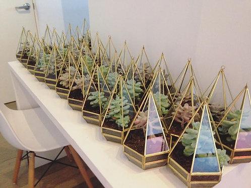 Terrario Pirámide Chico