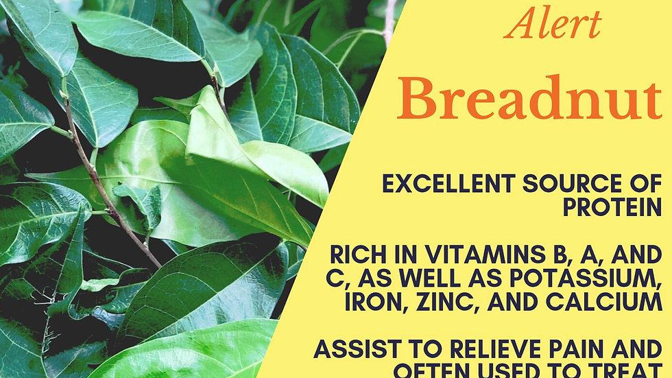 Breadnut Leaf Tea (2oz)