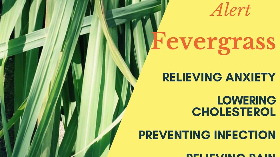 Fevergrass (1oz)