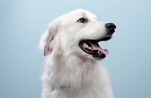 Dog's Portrait