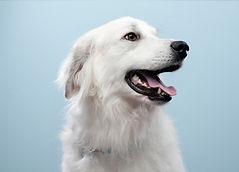 Retrato del perro