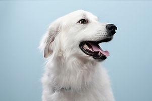 Dog porträtt