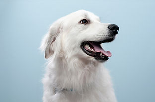 Portrait Dog's