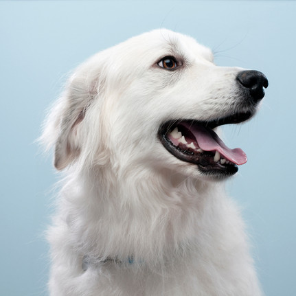 Why DNA-based allergy tests are not the best for your pet.