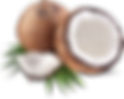 Coconut_transparent.png