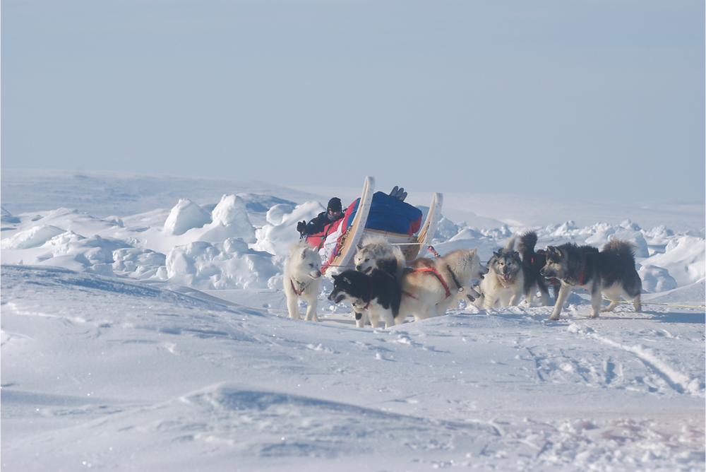 dogsledding, Canadian arctic, expedition