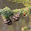 Thumbnail: Black Spruce