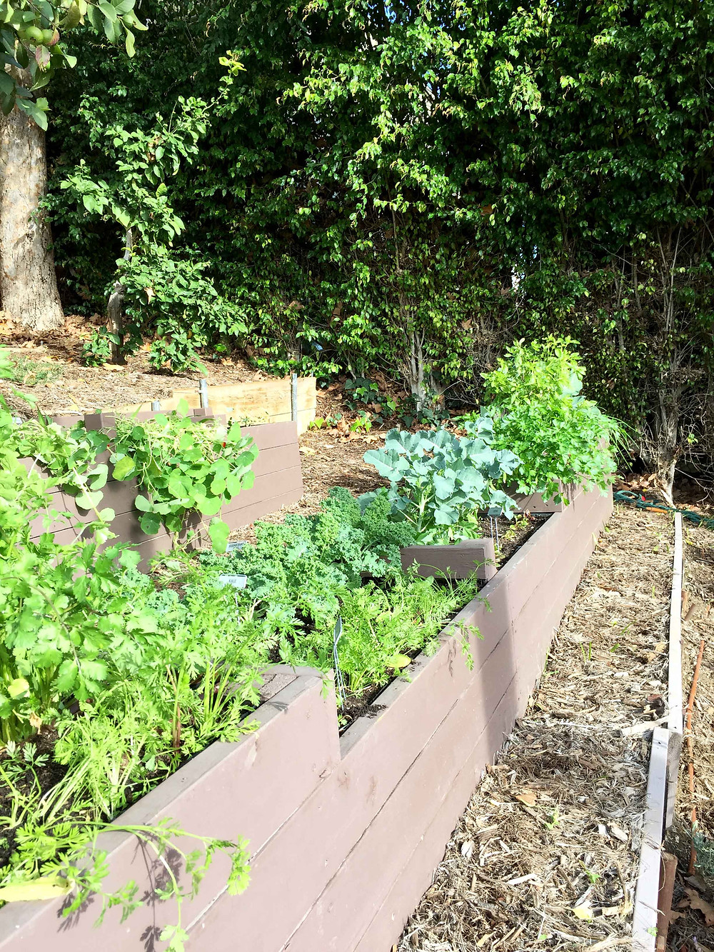 vegetable garden, los angeles, raised beds, garden recipes, drip irrigation, sustainable